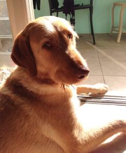 cool tile, hot sun, happy dog