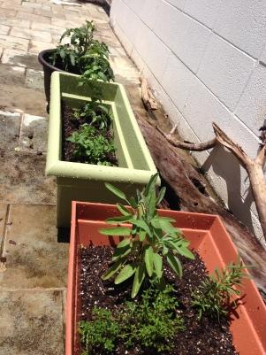 overdue herb garden